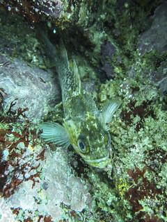 Monterey Dive - Lover's Point