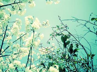 春の鳴き声