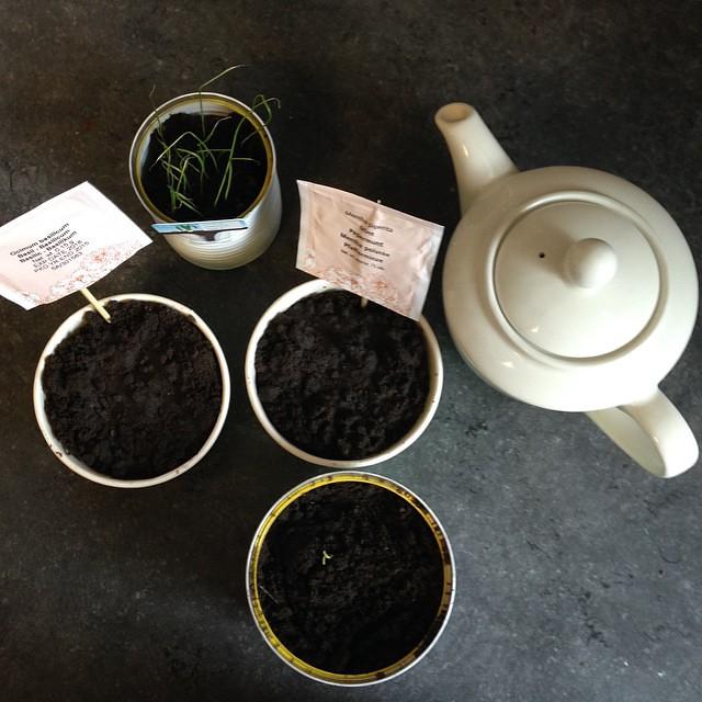 El jardín de la alegría #pueblitolindo #spring #mint #prei #basil #paprika #53semanas