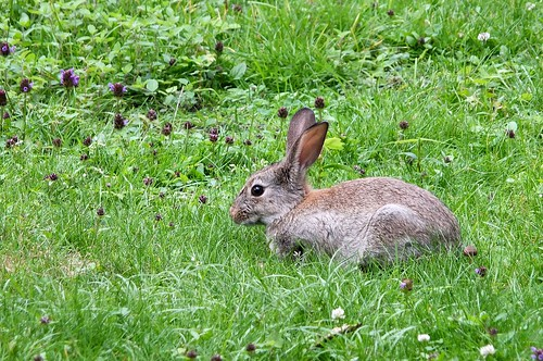 berlin wilder hase