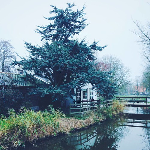 Tree house.. ---------------------
