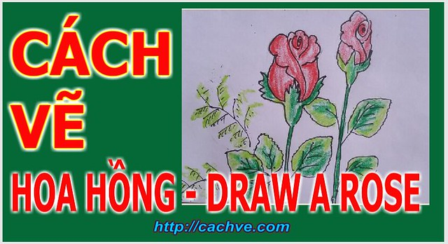 Cach ve hoa hong don gian | Drawing A rose