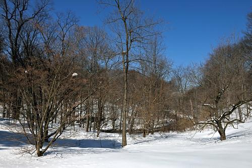 landscapes newyorkbotanicalgarden bronxriver