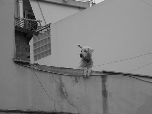 Παρατηρητης-Watcher