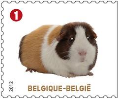 09 Animaux de compagnie timbreb