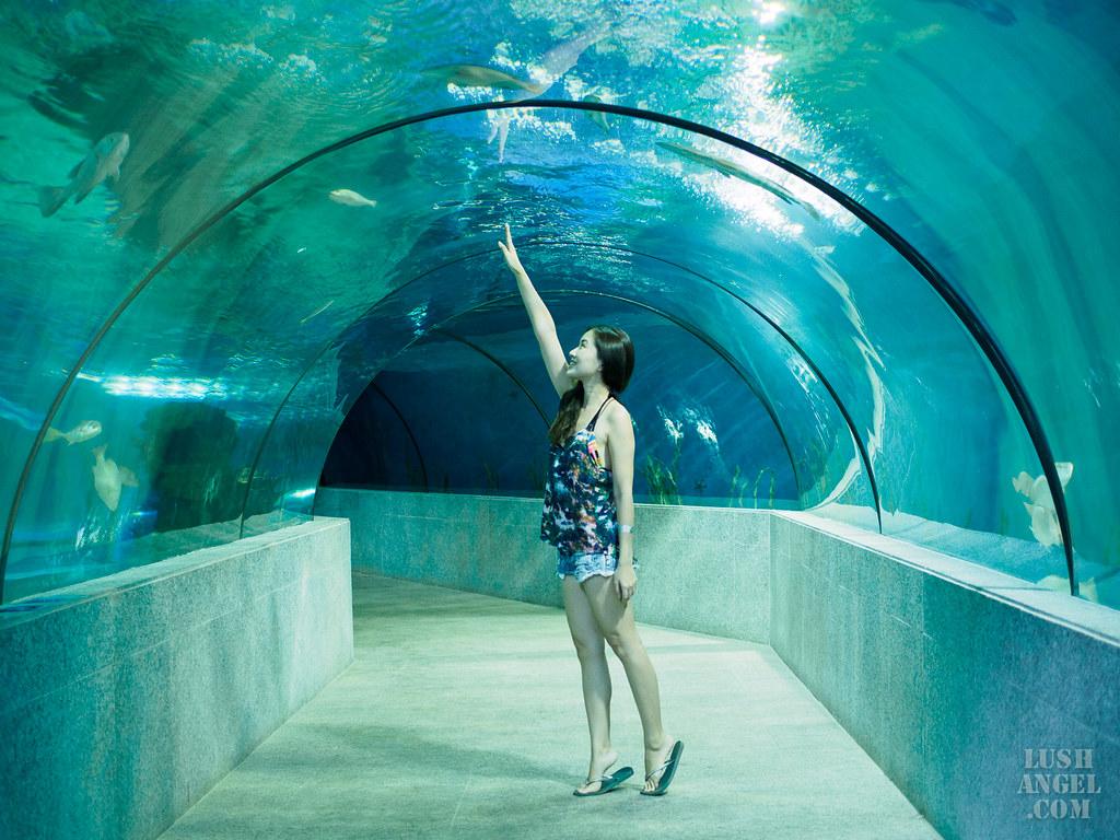 boracay-aquarium-tunnel