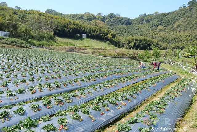 劉正男高冷草莓園  (28)