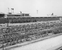 Preserving Kitchens, Knott's Berry Farm, 1958