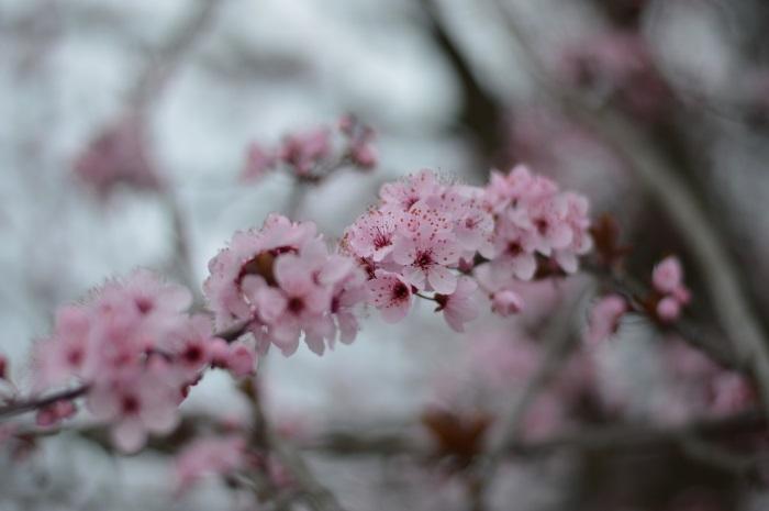 pink, wildflower girl, fashion blog, outfit, daniel wellington (24)