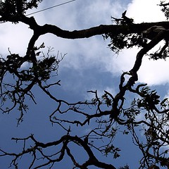 #tree without #leaves and only with #branches in the #evening with the #blue #sky and #clouds