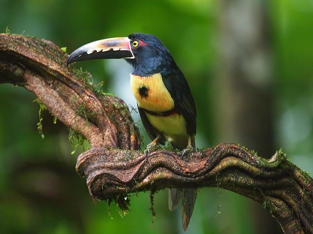 коста рика птицы фото отличать оригинальные духи