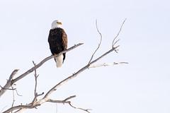 Grand Teton National Park, Wyoming, USA.