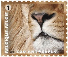 11 Zoo Timbre 3 Lion