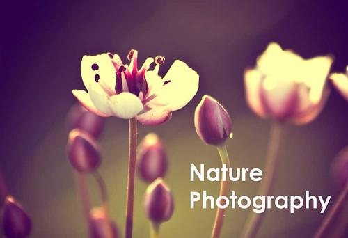 SpringFlowerPhoto
