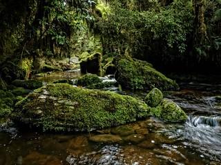 Makirikiri Stream, Paparoa Range, West Coast
