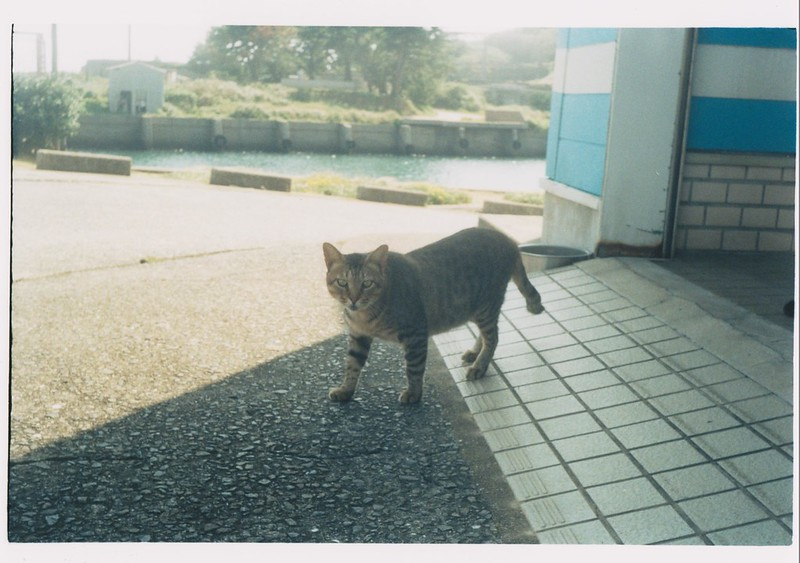 The cat which lives for Ikeshima2