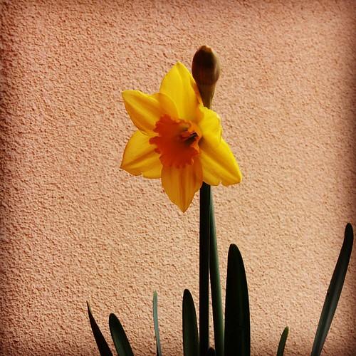 Kiekeboe. #lente