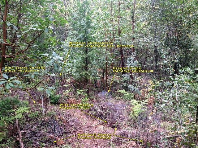 Food Forest Plot #6 - Natives