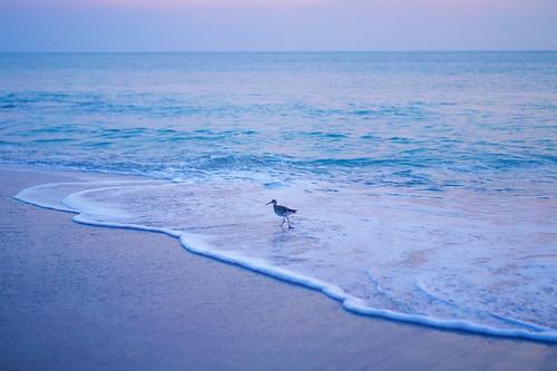 ocean beach sunrise dawn florida sandpipers indialantic