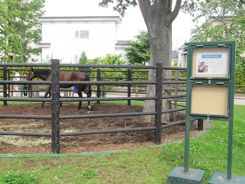 函館競馬場で見たジャガーメイル