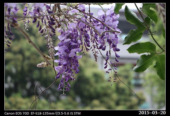 2015_0320Flower22