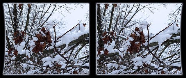 Winter Hanging On 3 - Cross-eye 3D