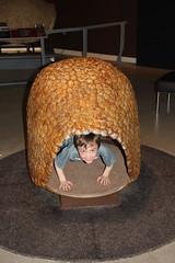 Olsen in a shell