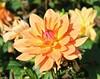 Flower (162)