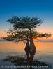 Sunrise Among the Bald Cypress