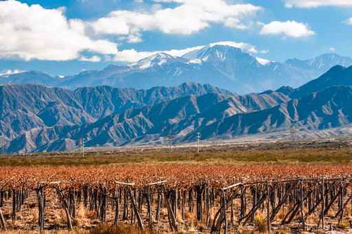 Volcano Aconcagua and Vineyard. Aconcagua is the highest mountain