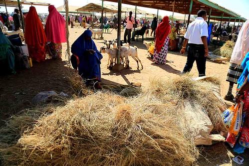 Burao livestock market, Somaliland