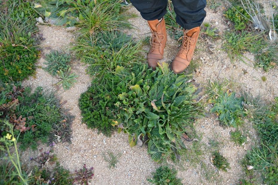 lara-vazquez-mad-lula-style-boots-countryside