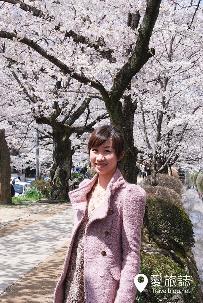 京都赏樱景点 哲学之道 17