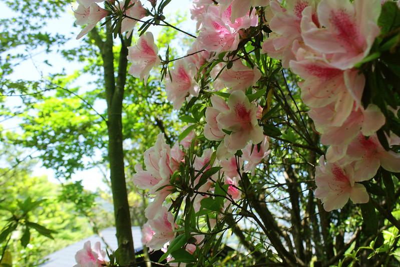 2014-05-07_03429_九州登山旅行.jpg
