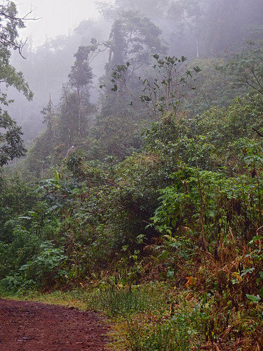 Dolores (Quezon) Philippines Picture : Philippines, a road in the tropical rainforest