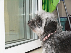 Lost puppy at window