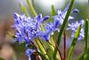 a symphony of light - light blue flowers