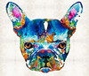 Colorful French Bulldog Dog Art By Sharon Cummings
