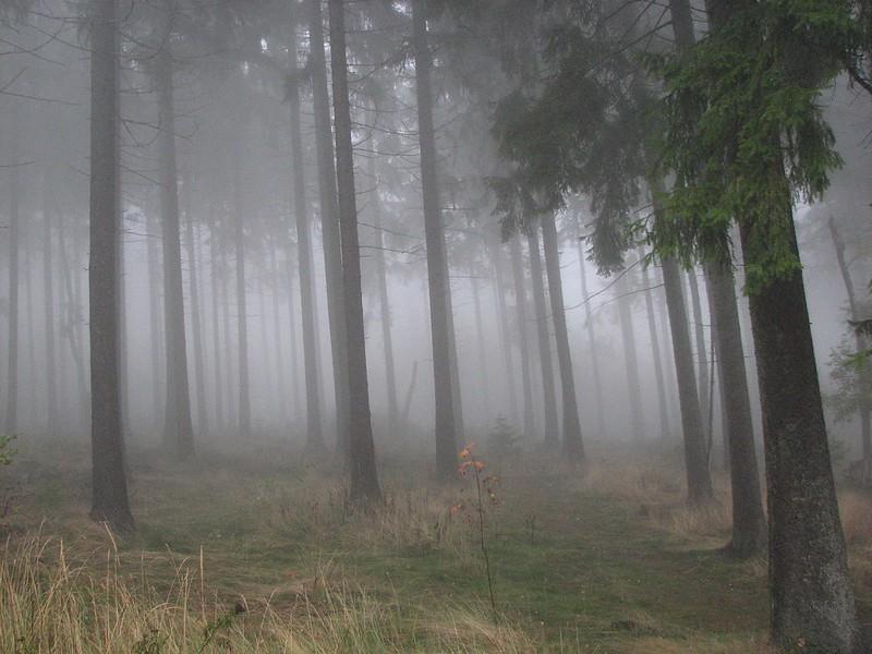 November Fog, 1