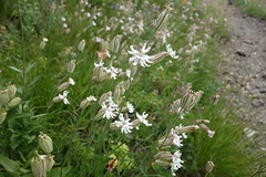 shrub, flower, grass, plant, subshrub, herb, wildflower, flora, meadow,