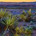 Desert Awakening by James Neeley
