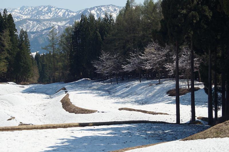 残雪と桜_201504_NO1