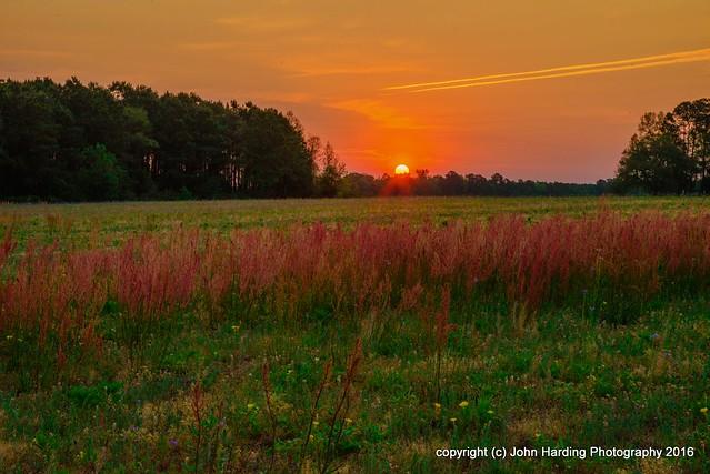 Wild Peppergrass