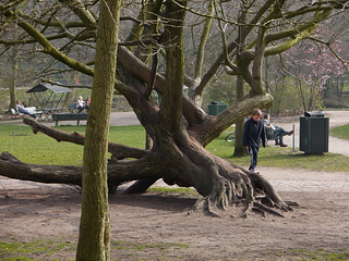 a Playground Tree in the citypark Sarphati-park in Amsterdam Zuid; March 2014, photo by Fons Heijnsbroek