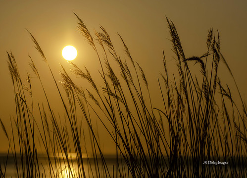 uk sunset sunlight seascape nature weather silhouette outdoors calming serenity wirral wildgrasses