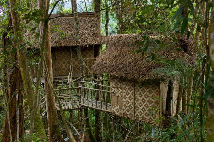 Terra's Tree Houses