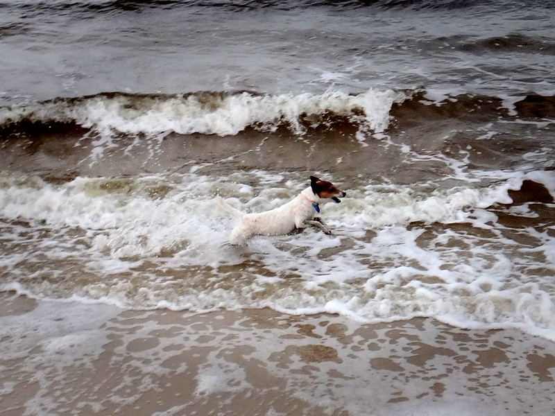 Dog in the Waves