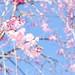 P1020793 by Ryosuke Yagi