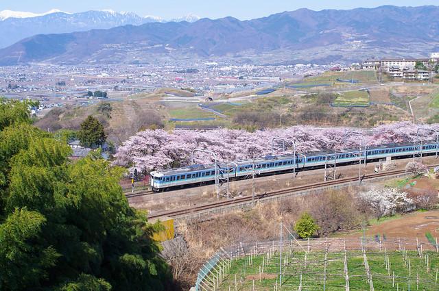 桜と電車 : 勝沼ぶどう郷駅辺り