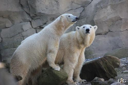 Zoo am Meer Bremerhaven 08.03.201583
